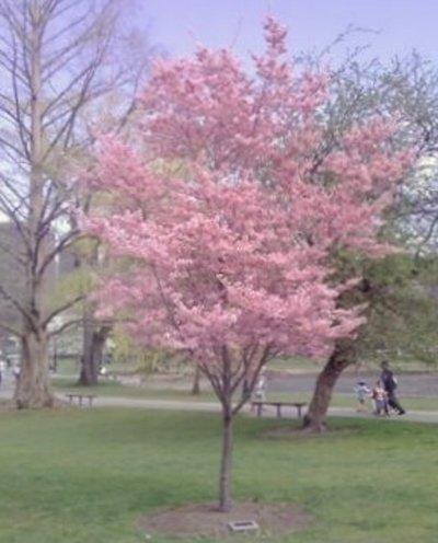 april-2010-mr-asos-tree