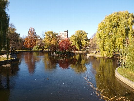 留学生活(暮らし)の魅力7:ボストン市民の憩いの公園