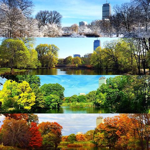 留学生活(暮らし)の魅力5:春夏秋冬・ボストンの公園の風景